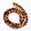 Tiger Eye Beads, 11x8mm Barrel, 15 Inch Strand